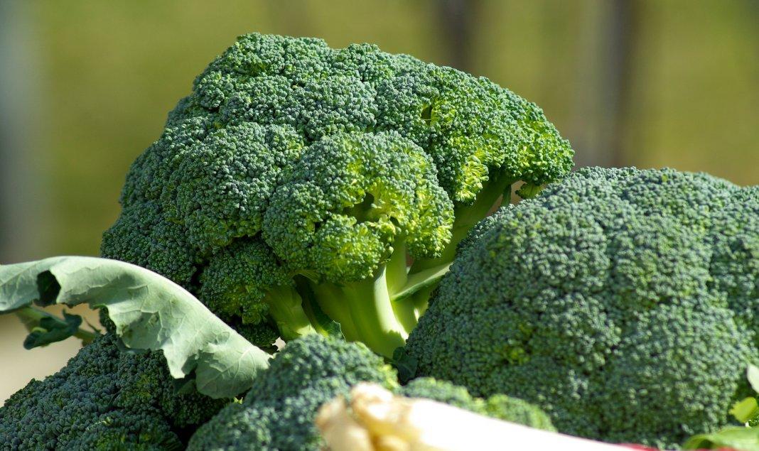 действия агротехника выращивания капусты брокколи термобелья