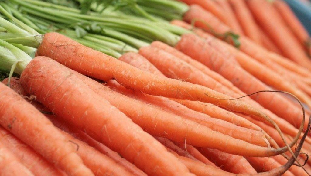 Морковь посадка и выращивание