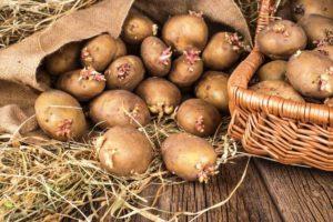 Посадка рассады в мае — Огород на даче