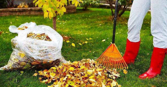 Обработка сада осенью от вредителей и болезней: подготовка сада к зиме