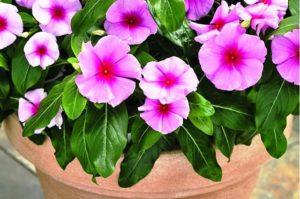 Можно ли сажать тюльпаны весной: посадка цветов на даче в весеннее время, в каком месяце лучше посадить, когда они зацветут