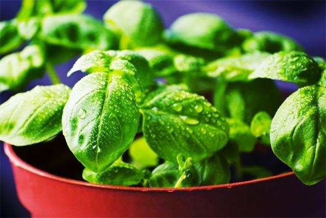 Выращивание зелени в закрытых помещениях