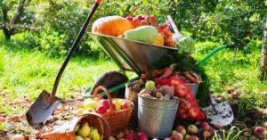 Календарь основных работ в плодовом саду на год