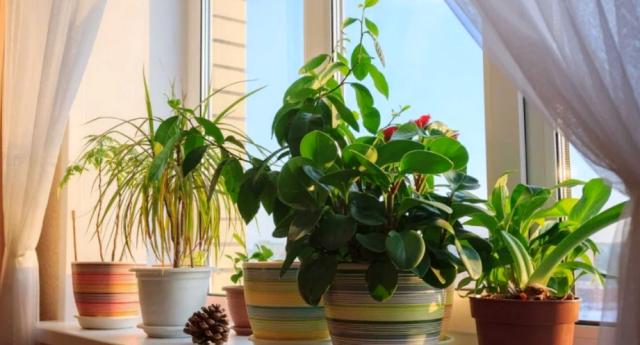 Уход за комнатными цветами зимой в домашних условиях