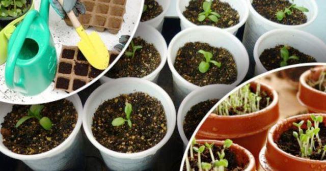 Сроки для посадки семян на рассаду
