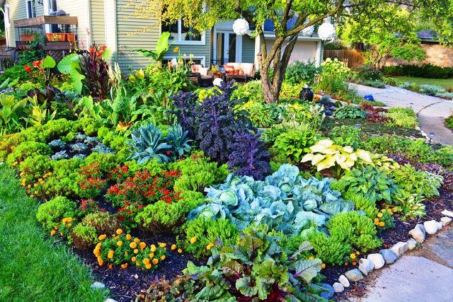 Правила посадки растений на дачном участке