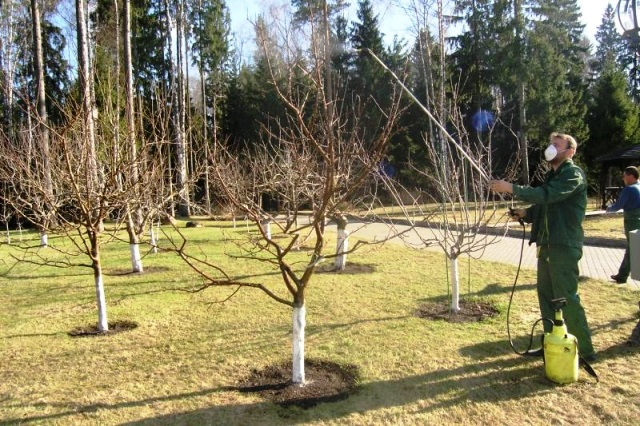 Как ухаживать за садовыми деревьями и кустарниками осенью видео урок