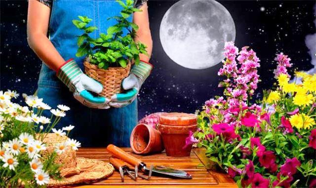 Лунный календарь цветовода на 2020 год