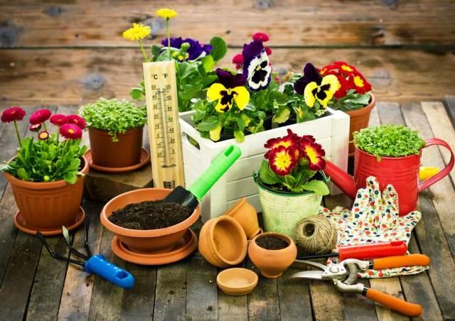 Благоприятные дни для посадки цветов в 2020 году