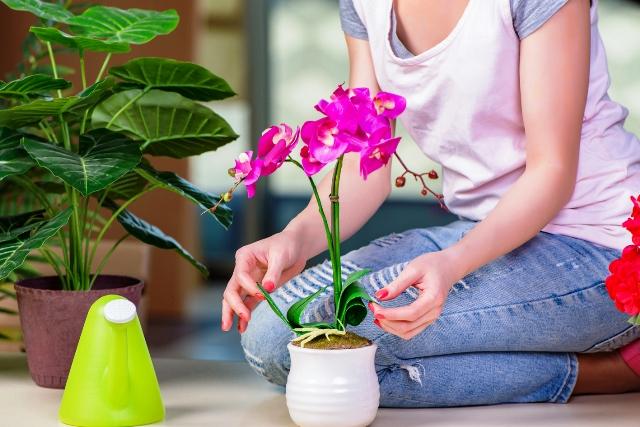 Правильная подкормка комнатных растений зимой