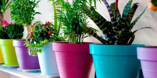 Подкормка комнатных растений: когда и как удобрять