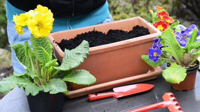 Многолетние цветы осенью: сажать или не сажать, вот в чём вопрос