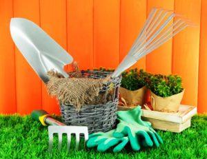 Посадка моркови и свеклы в мае