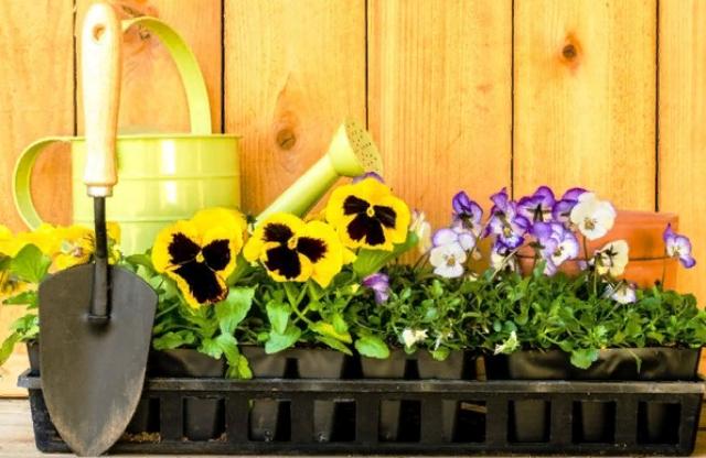 Когда сажать семена цветов в марте thumbnail