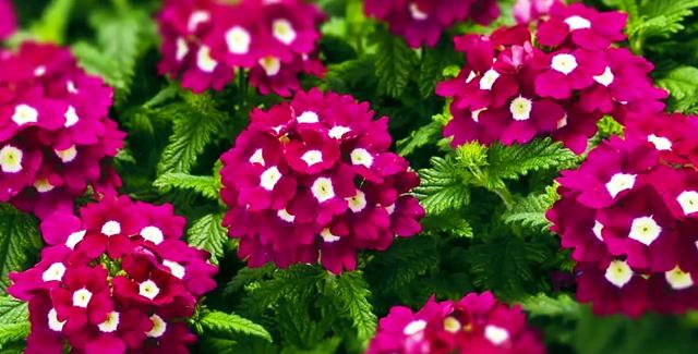 рассада каких цветов не боится заморозков