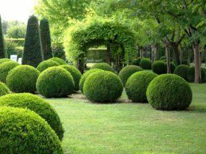 Все о примулах в саду