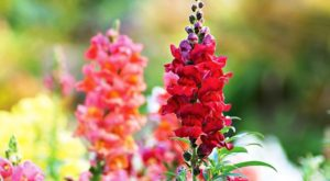 Как вырастить базилик из семян: правила посадки в открытый грунт
