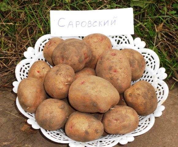 Картофель Беллароза урожайный скороспелый засухоустойчивый