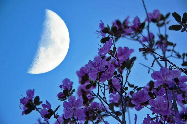 Лунный календарь цветовода на март 2020 года