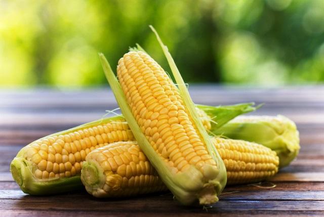 Выращивание кормовой кукурузы - MicroArticles