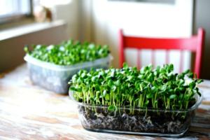 Уход за цветущими комнатными растениями