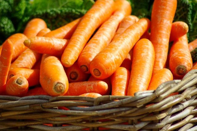Посев моркови по лунному календарю в 2021 году: сроки, благоприятные дни