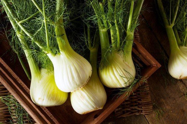 Выращивание фенхеля: как и когда сажать, уход в открытом грунте, полезные свойства