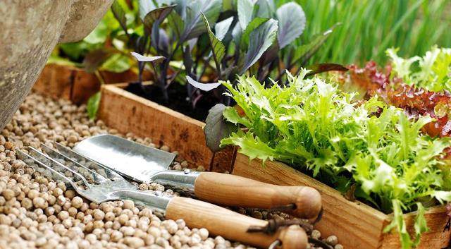 Что посадить и посеять  в мае в открытый грунт?