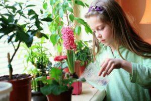 Как вырастить шиповник на даче
