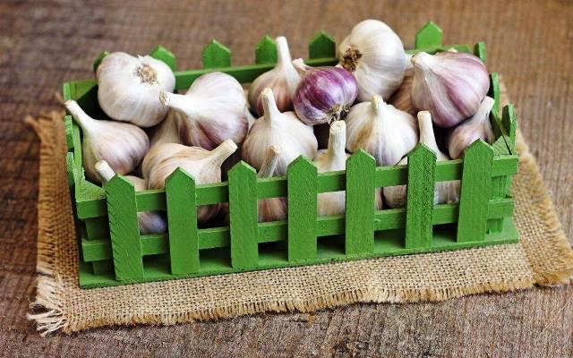 Подкормка чеснока весной для большого урожая: лучшие средства для удобрения