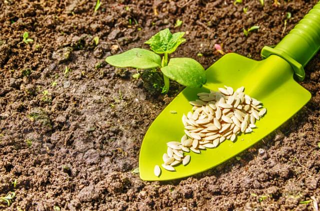 Посадка огурцов в июле: когда сеять, выращивание и уход