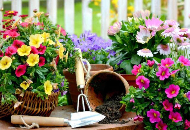 Какие цветы посадить и посеять в августе в открытый грунт