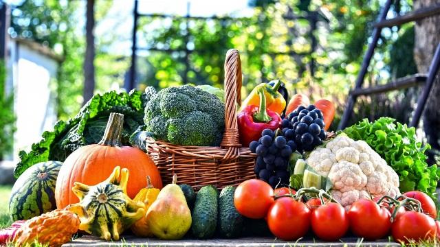 Работы в саду и огороде в августе: что нужно сделать, календарь