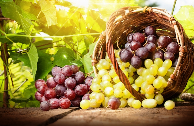 Когда собирать урожай винограда на хранение: сроки, как хранить