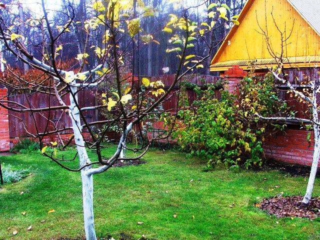 Уход за деревьями и кустарниками осенью: подкормка, обрезка, подготовка к зиме