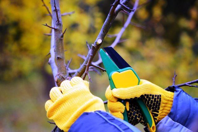 Обрезка плодовых деревьев осенью в 2020 году: сроки, как правильно обрезать