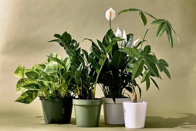 Подготовка комнатных растений к зиме: подкормка, полив, уход
