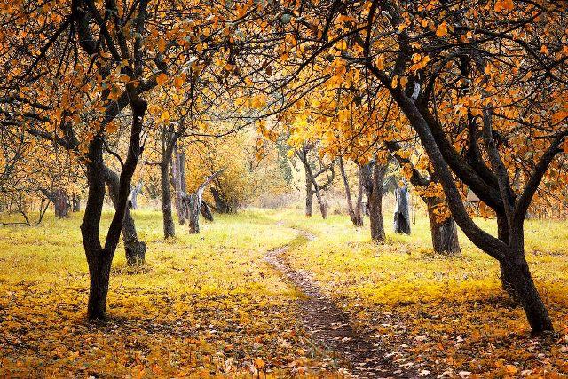 Подкормка плодовых деревьев осенью: как и чем подкармливать, сроки