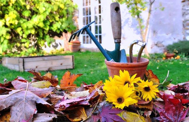 Работы в саду и огороде в ноябре: что нужно сделать