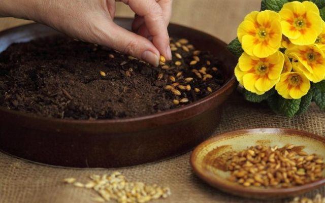 Какие цветы сеять на рассаду в марте 2021 года: благоприятные дни