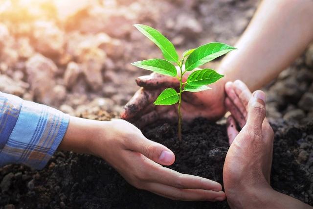 Лунный календарь для посадки деревьев и цветов в 2021 году: когда сажать, благоприятные дни