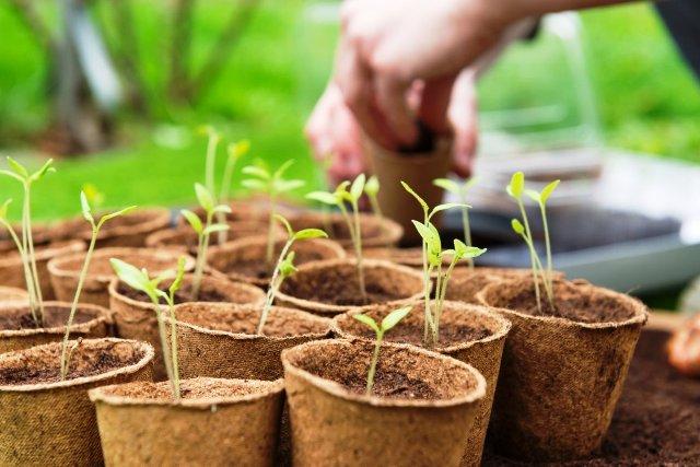 Лунный посевной календарь огородника на март 2021 года: благоприятные дни