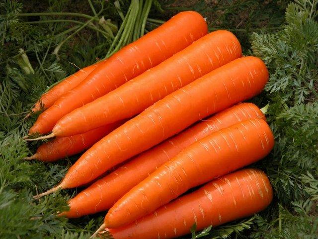 Лучшие сорта моркови на 2021 год: самые урожайные, вкусные, сочные, сладкие