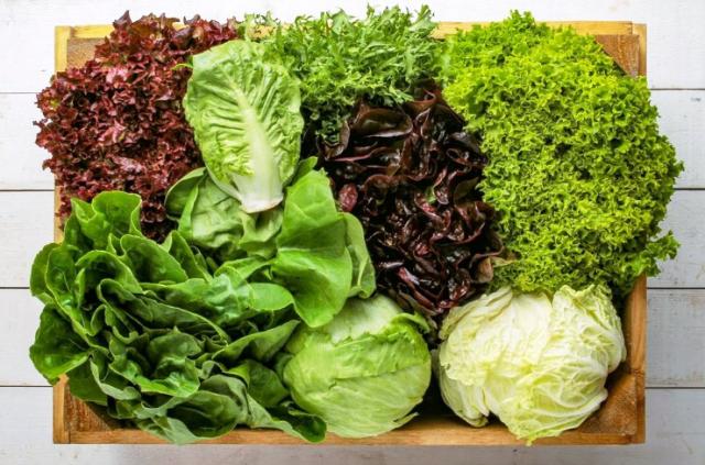 Лучшие сорта салатов для теплиц и открытого грунта на 2021 год: новые, вкусные