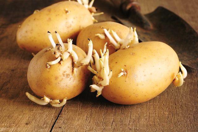 Посадка картофеля в мае 2021 года по лунному календарю: благоприятные дни