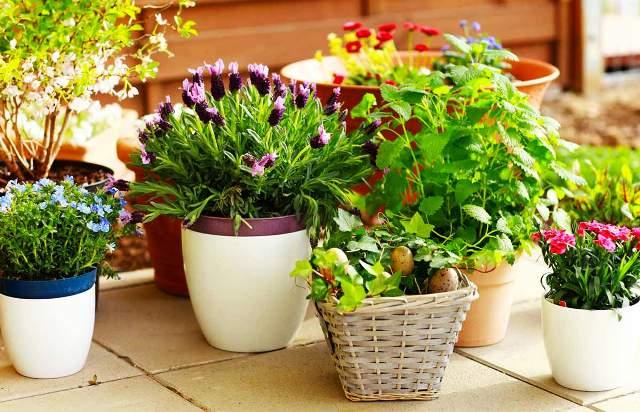 Лунный календарь цветовода на апрель 2021 для комнатных растений