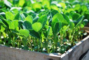 посев семян в апреле 2021