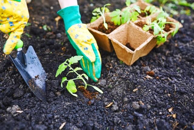 Высадка рассады томатов в июне в 2021 года: когда сажать, благоприятные дни
