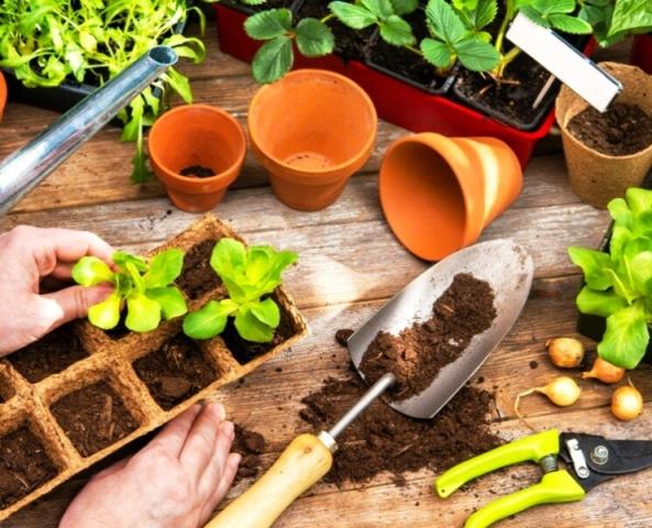 Благоприятные дни для высадки рассады овощей в 2021 году по лунному календарю: сроки