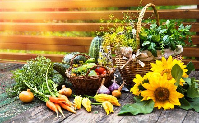 Лунный календарь садовода и огородника на июнь 2021 года: благоприятные дни